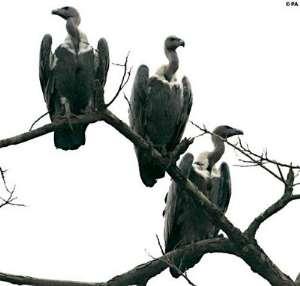 Bloody Pen-Armed Robbers: Postcolonial Vultures