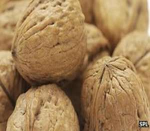Could two handfuls of walnuts a day keep the fertility doctor away?