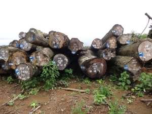 D.O. Nguti Suspends Activities Of Nature Cameroon