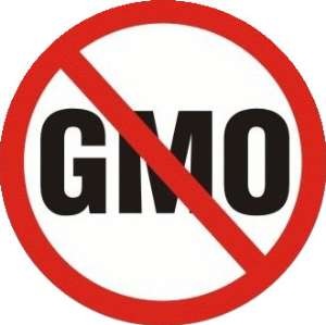 Anti-GMO Campaigners Kick Against Ghana's Plant Breeders Bill