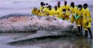 Flashback - a whale washed ashore