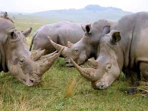 Rhino Population Increase In Assam's Kaziranga National Park