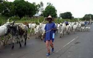 Orders to kill cattle amounts to declaring war - Fulani group