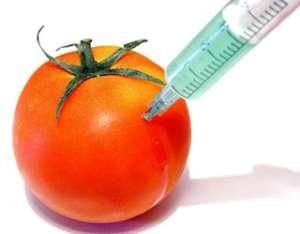Ghana: GMO Test Trials Prove Divisive In Ghana