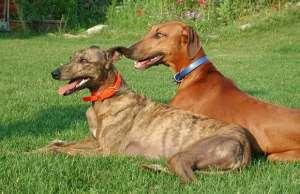 Dagaaba-Frafra Compete For Dog Prize