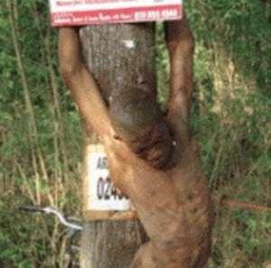 Bizarre: Man killed and hanged