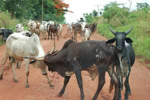 Accra Hosts Farmer-herder Relations Workshop