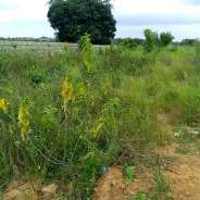 4 Plots of land for sale at Aburi