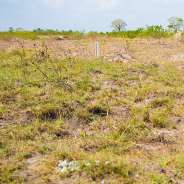 Land at Afienya
