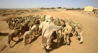 A man walks with his sheep near North Darfur's state capital el-Fasher on September 6, 2016.  By ASHRAF SHAZLY (AFP/File)