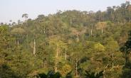 Re-afforestation Campaign Intensified