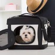 Ways That Can Help You Travel Safely With Your Pet This Holiday Season