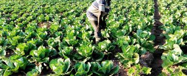 Solar-Powered Irrigation: A Boost For Farming Productivity