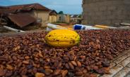Farmers Are Key To Improved Cocoa Yield