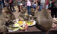 Thailand Holds Big Birthday Party For Wild Monkeys