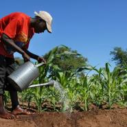 Regulatory Body Needed At Agric Sector