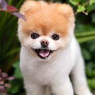 World's Cutest Dog Dies From 'heartbreak'