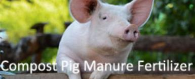 How to Compost Pig Manure into Organic Fertiliser