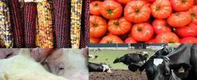 GMO Foods illegally Hit Ghana — Committee Report