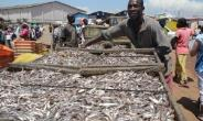 Ghana On The Verge Of Losing Its Fish Stock To China – Natural Resources Economist Warns