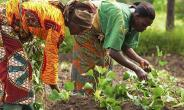 Ministry Of Food Sets Target Of 500,000 Farmers In 2018