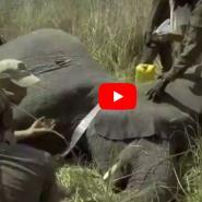 Benin: Alongside park rangers training to stop poachers