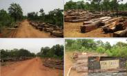 MERCHANTABLE ROSEWOOD TIMBER NOW SOLD IN NORTH AND WEST GONJA DISTRICTS LIKE FIREWOOD