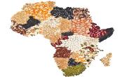 Awesome African Foodie Destinations