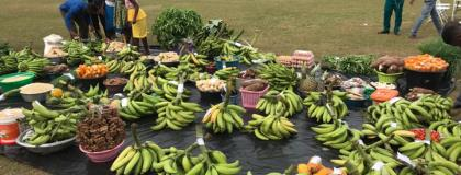Promote Productive Agriculture To Ensure A Hunger-Free Nation—UN