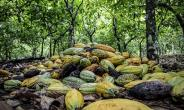 Where Is Price In The Joint Framework Of Action To End Deforestation In Cocoa?