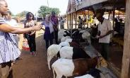 Livestock Market Complex For Bawku Municipality
