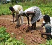 Planting for food and jobs programme receives support