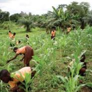 IFAD Head Hails France's Continued Support To Small Farmers In Developing Co