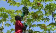 Ghana Government To Tackle Post-Harvest Losses