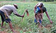 Planting For Food And Jobs Have Come To Stay; Take It Serious