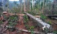 CSOs Revamp Campaign Against Mining In Atewa Forest Reserve