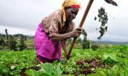 Good News For 'Planting For Food, Jobs' Applicants