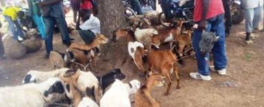 Goat And Sheep Sellers In Dorimon Seek Government Intervention