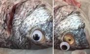 Fish Shop Sticks Plastic Eyes On Fish To Make Them Look Fresher