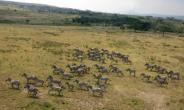 Thousands of Kenyan herders have invaded ranches, slaughtering animals and destroying pasture. Eight people have been killed in the land invasions since December.  By  (AFP/File)