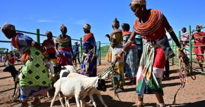 Traditional Samburu tribeswomen gather their goats to sell at Merille livestock market, some 411km north of Nairobi in Kenya's Marsabit county.  By TONY KARUMBA (AFP)