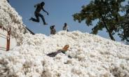 Boys jump from a giant truck called a 'titan' after loading it with cotton. The commodity is so valuable to Benin's economy that it is called 'white gold'.  By Stefan HEUNIS (AFP)