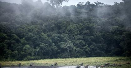 Gabon is heavily forested and the timber industry is hugely important for the economy.  By Amaury HAUCHARD (AFP/File)
