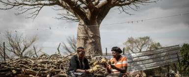 Historically credited with mythical and spiritual powers in African folklore, the baobab is known as the