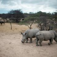 South Africa is home to 80 percent of the world's remaining rhinos.  By MUJAHID SAFODIEN (AFP/File)