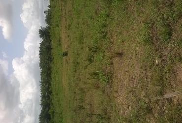 30 Acre registered land for sale @ Ashalaja Accra