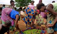 Alert! Special Research Document On Ghana's Rural Development Strategy