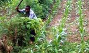 Combating Child Labour In Ghana: Significant Progress And Critical Challenges In Law Enforcement