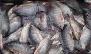 Slow Poisoning On Volta Lake…Fishermen Trap Fish With DDT