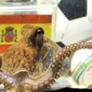 Octopus Paul